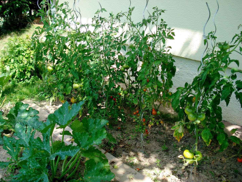Am Nager Son Potager Conseils Jardinage Mag Maison