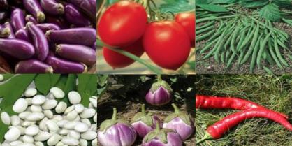 Comment cultiver des fruits et légumes bio sans jardin ?