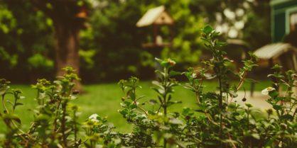 Jardin pouvant accueillir des animaux